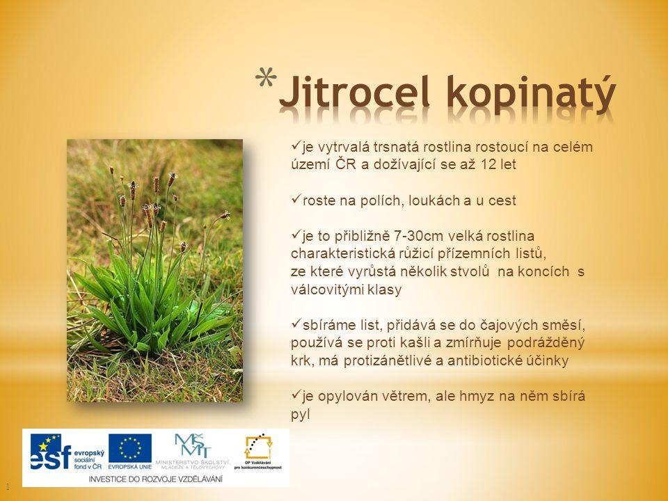 ] je vytrvalá trsnatá rostlina rostoucí na celém území ČR a dožívající se až 12 let roste na polích, loukách a u cest je to přibližně 7-30cm velká ros