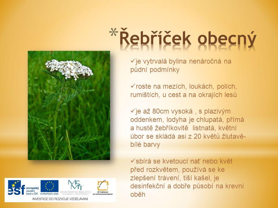 [ je vytrvalá bylina nenáročná na půdní podmínky roste na mezích, loukách, polích, rumištích, u cest a na okrajích lesů je až 80cm vysoká, s plazivým