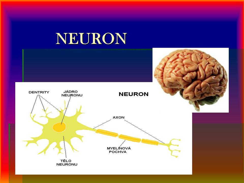 NEURON NEURON