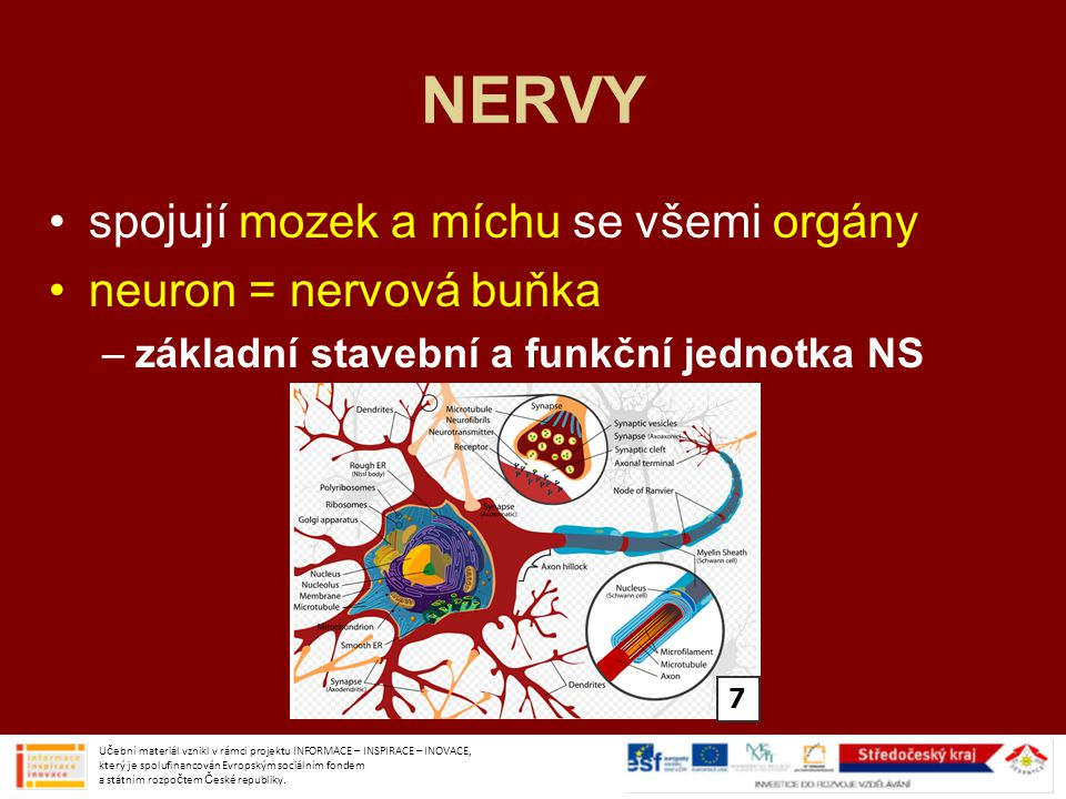 NERVY spojují mozek a míchu se všemi orgány neuron = nervová buňka –základní stavební a funkční jednotka NS Učební materiál vznikl v rámci projektu INFORMACE – INSPIRACE – INOVACE, který je spolufinancován Evropským sociálním fondem a státním rozpočtem České republiky.