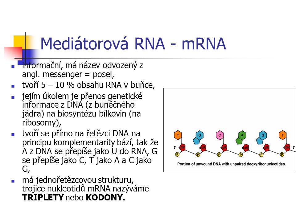 Struktura RNA primární struktura: je v podstatě stejná jako u DNA, rozdíl je jenom v složení nukleotidů, ve kterých je deoxyribosa nahrazena ribosou a
