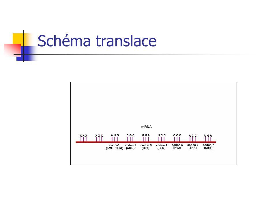 Transferová RNA – tRNA (přenosová) má velký význam při proteosyntéze, zabezpečuje přenos aktivovaných AMK na místo tvorby peptidového řetězce (z cytop