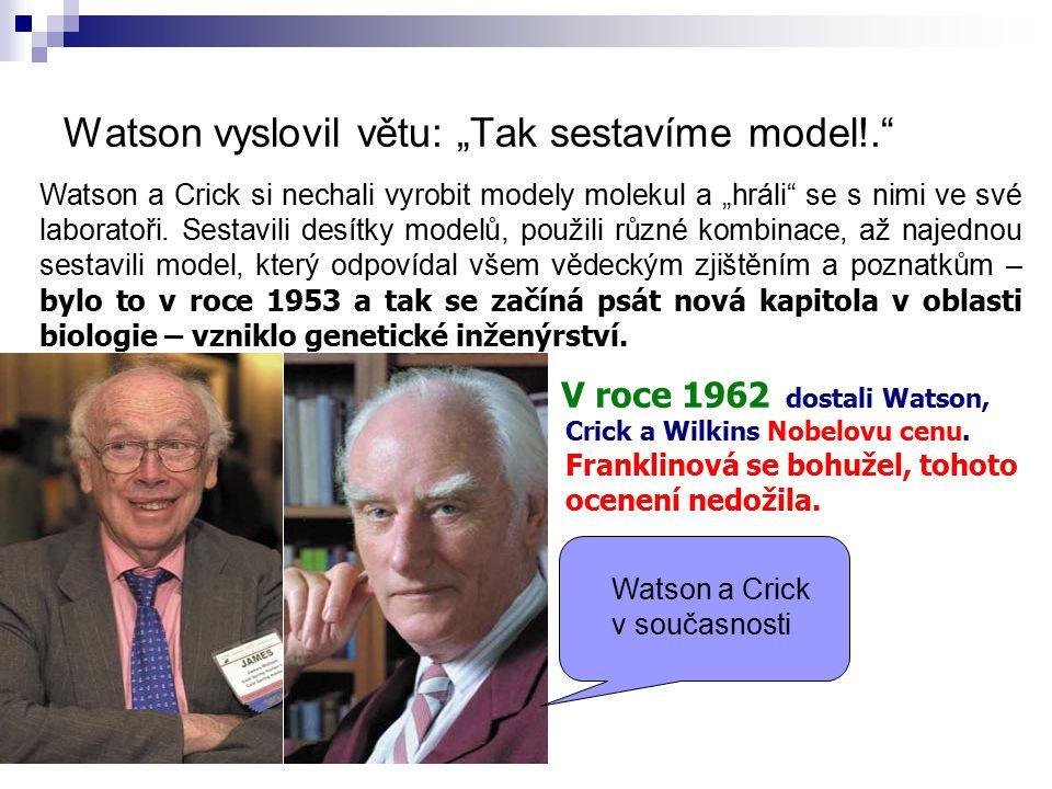 """Watson vyslovil větu: """"Tak sestavíme model!. Watson a Crick si nechali vyrobit modely molekul a """"hráli se s nimi ve své laboratoři."""