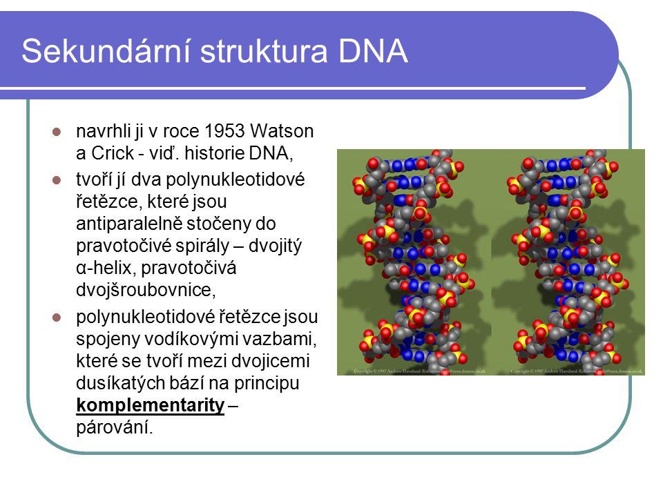 Primární struktura DNA určuje pořadí AMK v bílkovinách sekvence (sled) nukleotidů, které kódují jednu bílkovinu se nazývá GEN. Soubor všech genů v buň