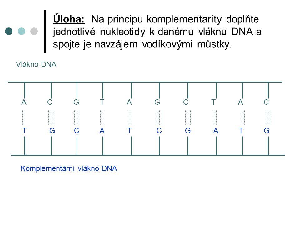 Sekundární struktura je poměrně stabilní, tuto stabilitu jí dodávají právě vodíkové vazby mezi polynukleotidovými řetězci. sekundární strukturu můžeme