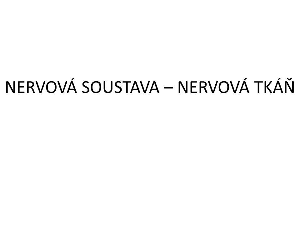 NERVOVÁ SOUSTAVA – NERVOVÁ TKÁŇ