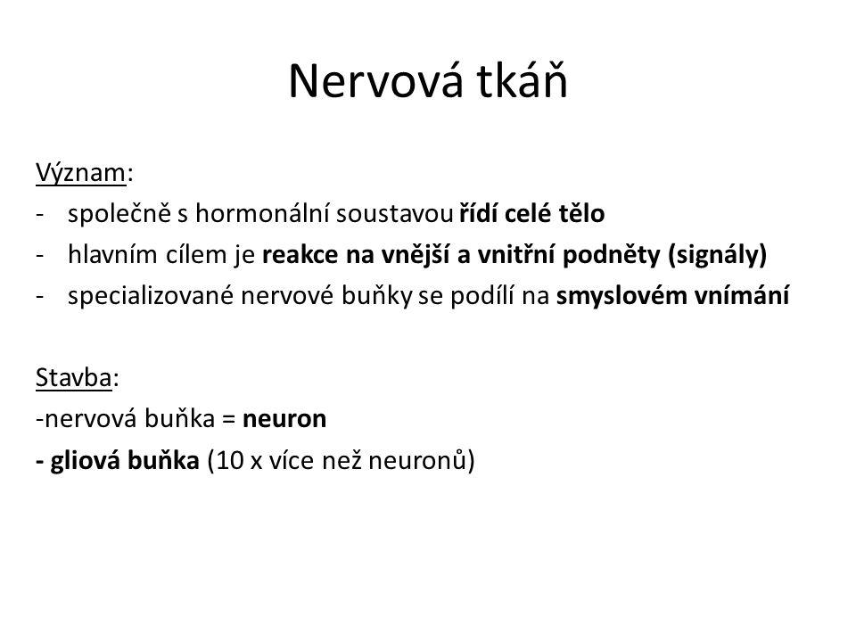 Nervová tkáň Význam: -společně s hormonální soustavou řídí celé tělo -hlavním cílem je reakce na vnější a vnitřní podněty (signály) -specializované nervové buňky se podílí na smyslovém vnímání Stavba: -nervová buňka = neuron - gliová buňka (10 x více než neuronů)