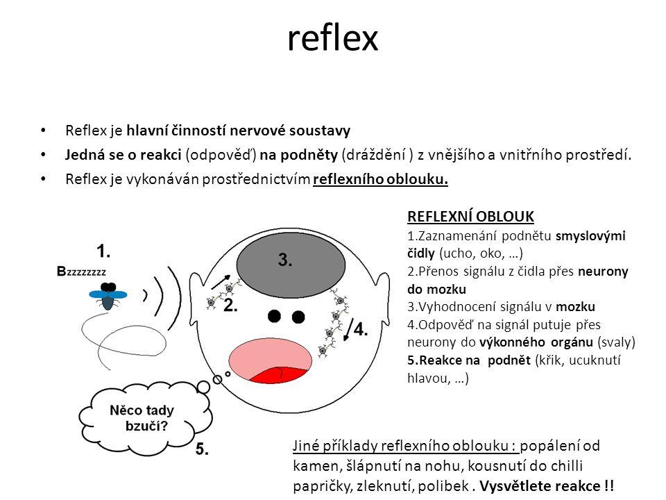 reflex Reflex je hlavní činností nervové soustavy Jedná se o reakci (odpověď) na podněty (dráždění ) z vnějšího a vnitřního prostředí.