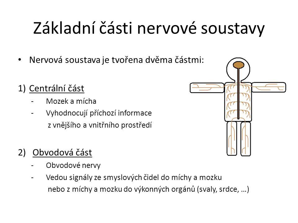 Základní části nervové soustavy Nervová soustava je tvořena dvěma částmi: 1)Centrální část -Mozek a mícha -Vyhodnocují příchozí informace z vnějšího a vnitřního prostředí 2) Obvodová část -Obvodové nervy -Vedou signály ze smyslových čidel do míchy a mozku nebo z míchy a mozku do výkonných orgánů (svaly, srdce, …)