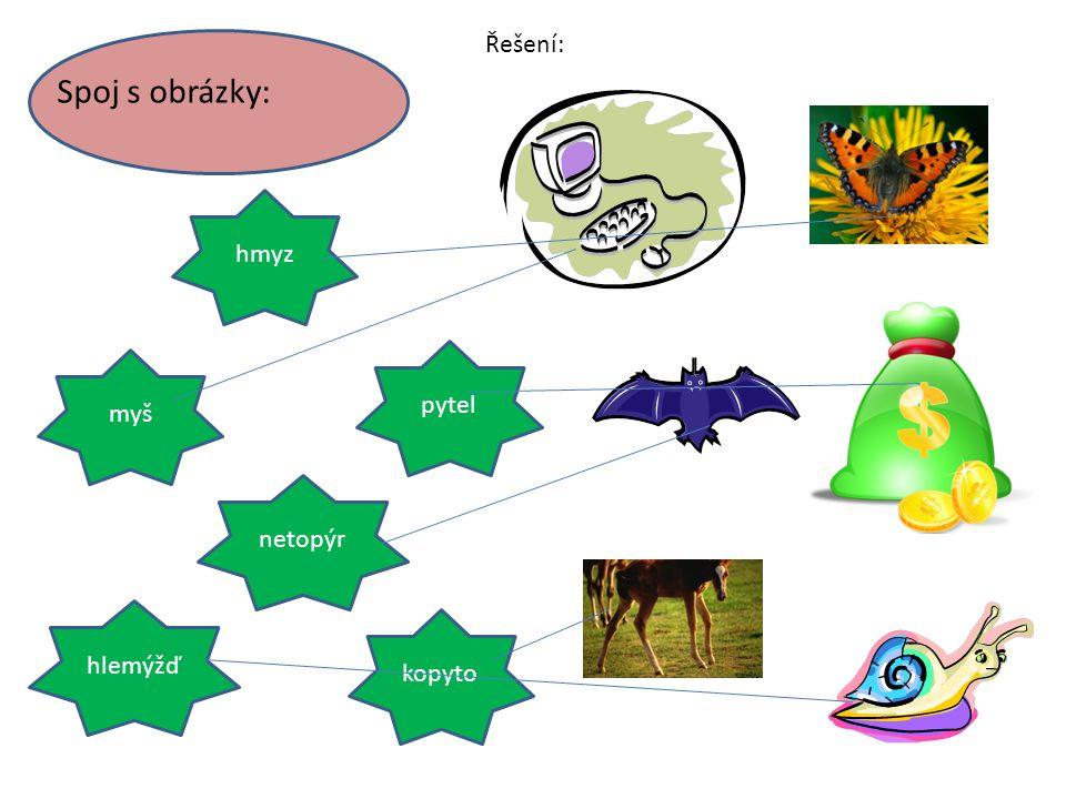 Spoj s obrázky: hmyz myš pytel netopýr kopyto hlemýžď Řešení: