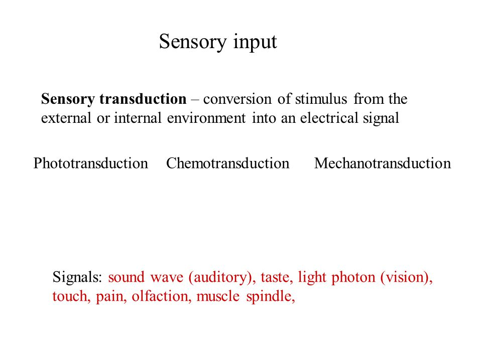 Sensory input Sensory transduction – conversion of stimulus from the external or internal environment into an electrical signal Signals: sound wave (a