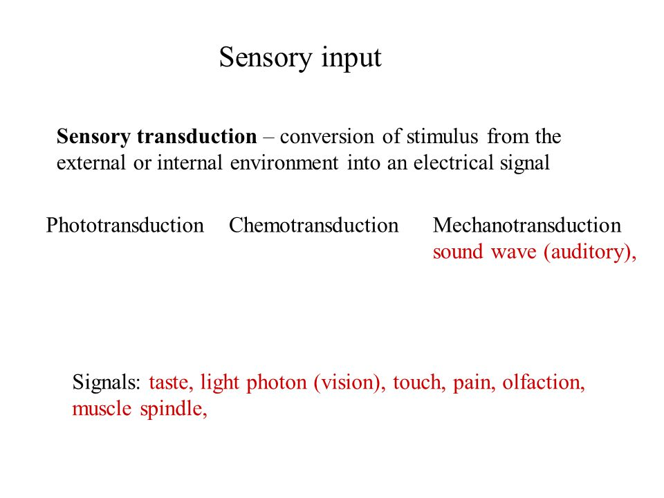 Sensory input Sensory transduction – conversion of stimulus from the external or internal environment into an electrical signal Signals: taste, light photon (vision), touch, pain, olfaction, muscle spindle, PhototransductionChemotransductionMechanotransduction sound wave (auditory),