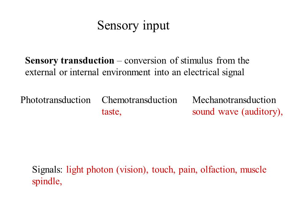Sensory input Sensory transduction – conversion of stimulus from the external or internal environment into an electrical signal Signals: light photon (vision), touch, pain, olfaction, muscle spindle, PhototransductionChemotransduction taste, Mechanotransduction sound wave (auditory),