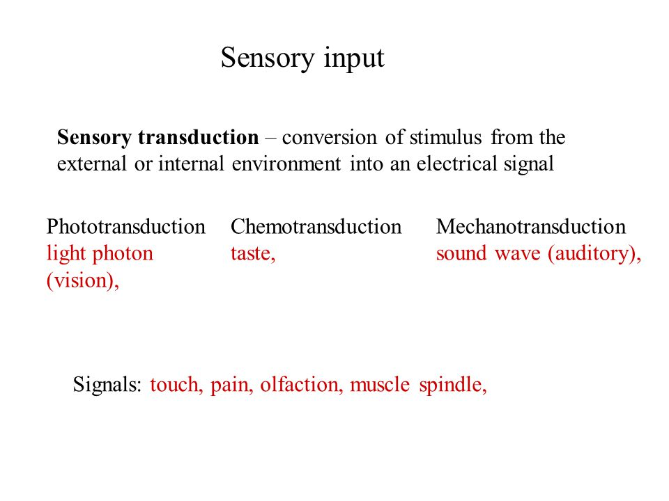 Sensory input Sensory transduction – conversion of stimulus from the external or internal environment into an electrical signal Signals: touch, pain, olfaction, muscle spindle, Phototransduction light photon (vision), Chemotransduction taste, Mechanotransduction sound wave (auditory),