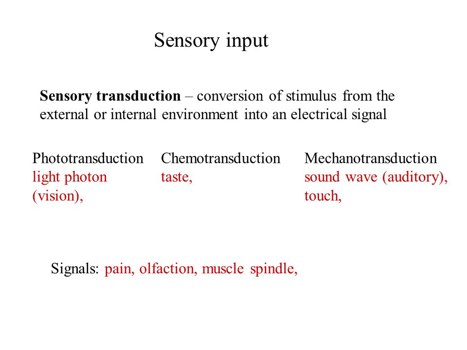Sensory input Sensory transduction – conversion of stimulus from the external or internal environment into an electrical signal Signals: pain, olfacti