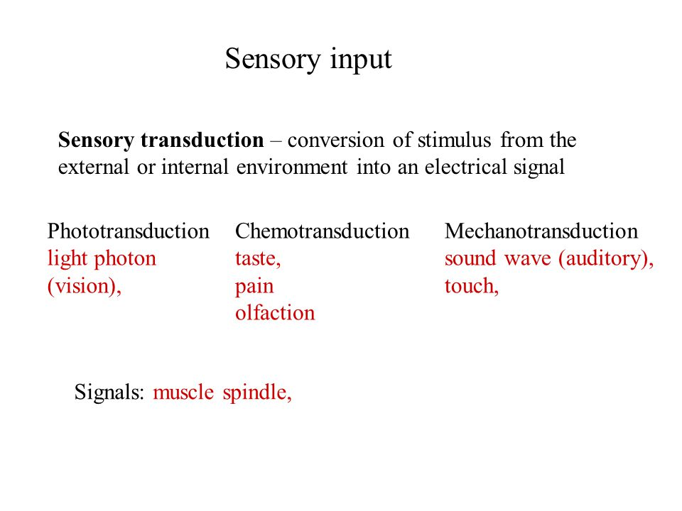 Sensory input Sensory transduction – conversion of stimulus from the external or internal environment into an electrical signal Signals: muscle spindle, Phototransduction light photon (vision), Chemotransduction taste, pain olfaction Mechanotransduction sound wave (auditory), touch,