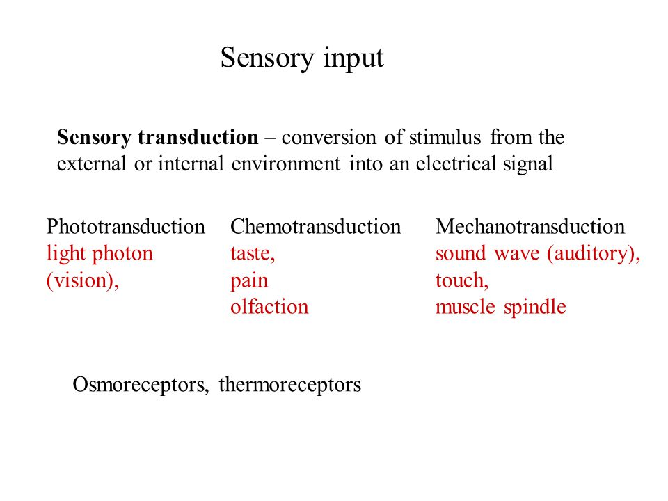 Sensory input Sensory transduction – conversion of stimulus from the external or internal environment into an electrical signal Osmoreceptors, thermoreceptors Phototransduction light photon (vision), Chemotransduction taste, pain olfaction Mechanotransduction sound wave (auditory), touch, muscle spindle