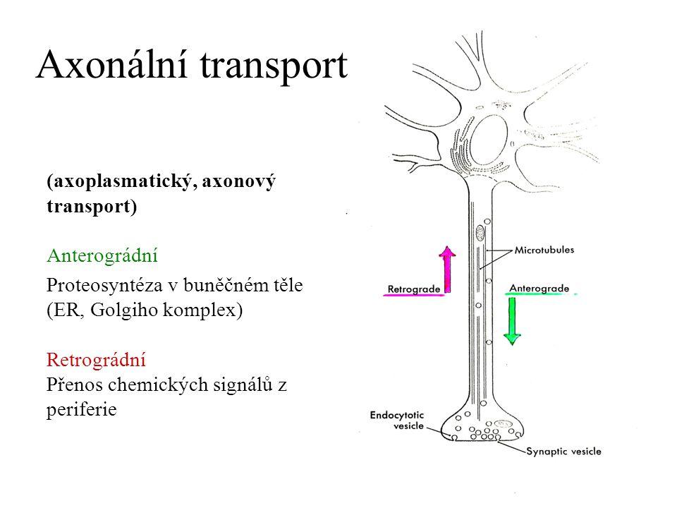 Anterográdní transport rychlý (100 - 400 mm/d) MAP kinesin/mikrotubuly neurotransmitery ve vezikulách a mitochondrie pomalý (0,5 – 10 mm/d) mechanismus neznámý komponenty cytoskeletu (aktin, myosin, tubulin), metabolické komponenty Retrográdní transport rychlý (50 - 250 mm/d) MAP dynein/ mikrotubuly staré mitochondrie, vezikuly (pinocytóza, receptorem zprostředkovaná endocytóza, transport např.