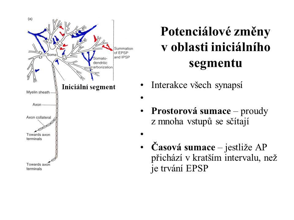 Potenciálové změny v oblasti iniciálního segmentu Interakce všech synapsí Prostorová sumace – proudy z mnoha vstupů se sčítají Časová sumace – jestliž