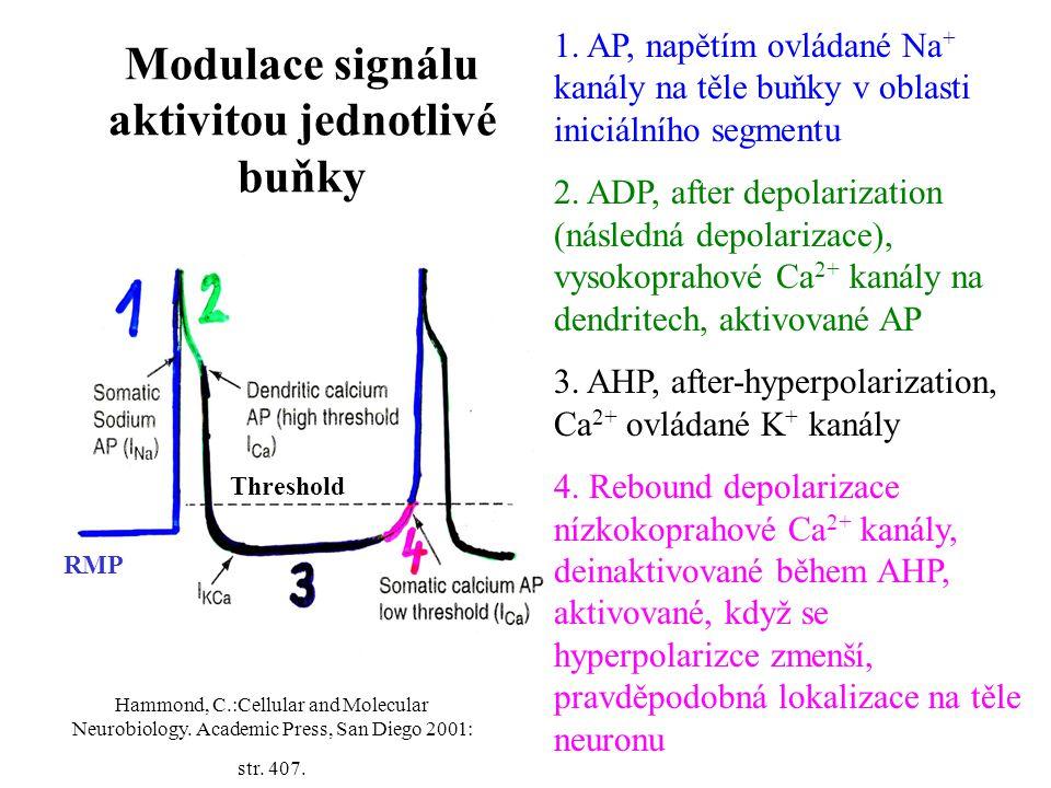 Modulace signálu aktivitou jednotlivé buňky 1. AP, napětím ovládané Na + kanály na těle buňky v oblasti iniciálního segmentu 2. ADP, after depolarizat