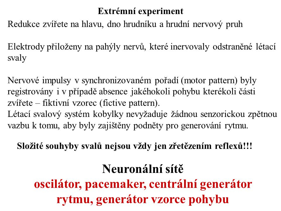 Extrémní experiment Redukce zvířete na hlavu, dno hrudníku a hrudní nervový pruh Elektrody přiloženy na pahýly nervů, které inervovaly odstraněné léta