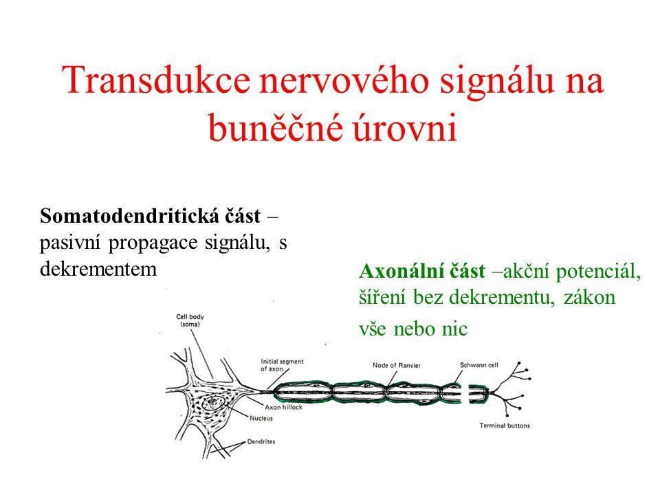 Transdukce nervového signálu na buněčné úrovni Axonální část –akční potenciál, šíření bez dekrementu, zákon vše nebo nic Somatodendritická část – pasivní propagace signálu, s dekrementem
