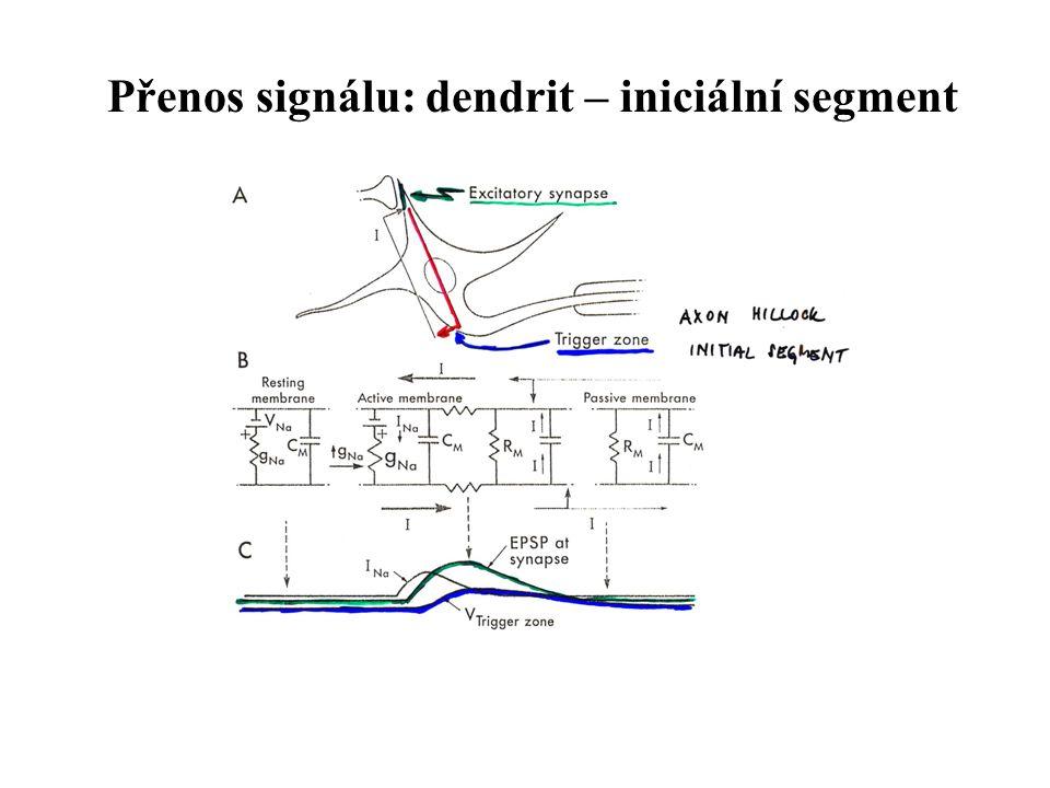 Axonální část AP – Ca 2+ kanály – vylití neurotransmiteru