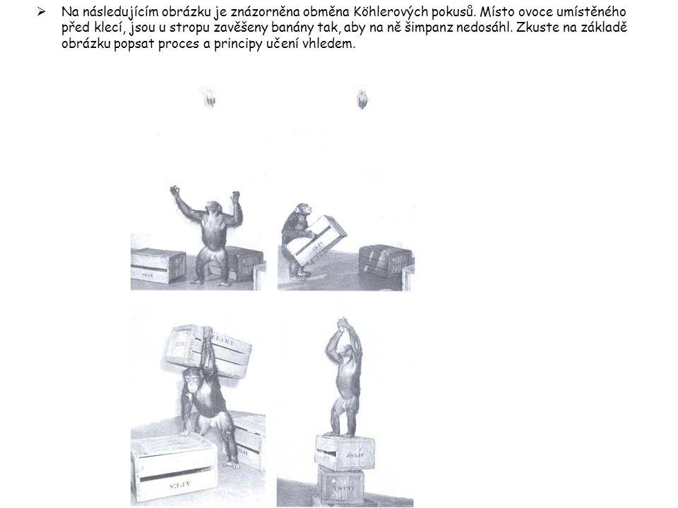  Na následujícím obrázku je znázorněna obměna Köhlerových pokusů. Místo ovoce umístěného před klecí, jsou u stropu zavěšeny banány tak, aby na ně šim
