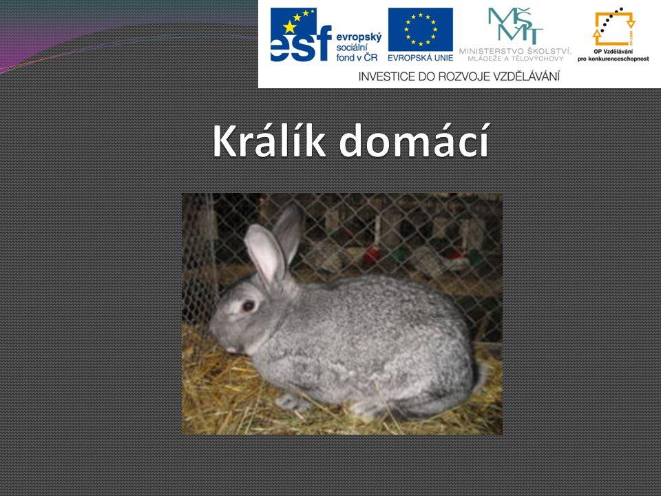 Králík domácí - patří mezi savce - domestikovaný králík divoký Domestikace je: a)zdomácnění, ochočení b)oživení c)domovní prohlídka Savci = obratlovci – společný znak: kojení mláďat, srst u většiny obratlovců