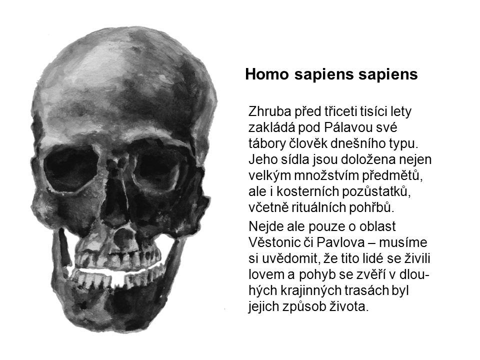 Homo sapiens sapiens Zhruba před třiceti tisíci lety zakládá pod Pálavou své tábory člověk dnešního typu. Jeho sídla jsou doložena nejen velkým množst