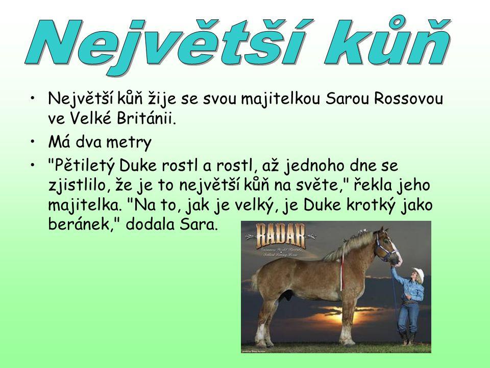 Největší kůň žije se svou majitelkou Sarou Rossovou ve Velké Británii. Má dva metry