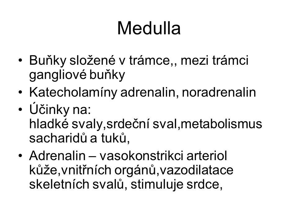 Medulla Buňky složené v trámce,, mezi trámci gangliové buňky Katecholamíny adrenalin, noradrenalin Účinky na: hladké svaly,srdeční sval,metabolismus s