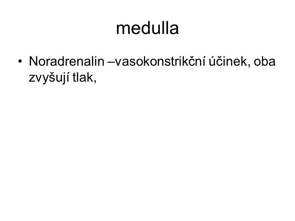 medulla Noradrenalin –vasokonstrikční účinek, oba zvyšují tlak,