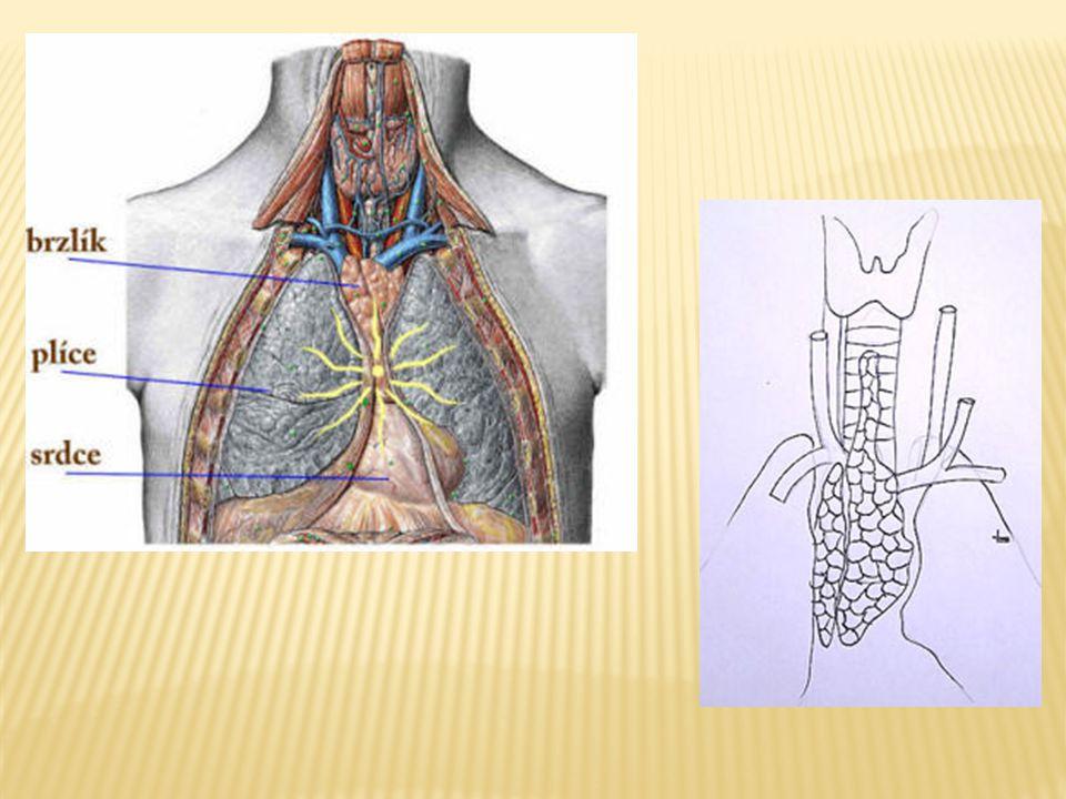  Jediný lymfatický orgán, který nesvádí přímý boj s antigeny