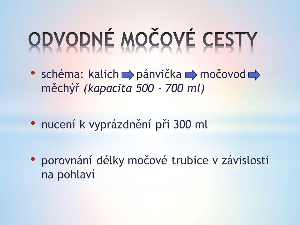 schéma: kalich -> pánvička -> močovod měchýř (kapacita 500 - 700 ml) nucení k vyprázdnění při 300 ml porovnání délky močové trubice v závislosti na po