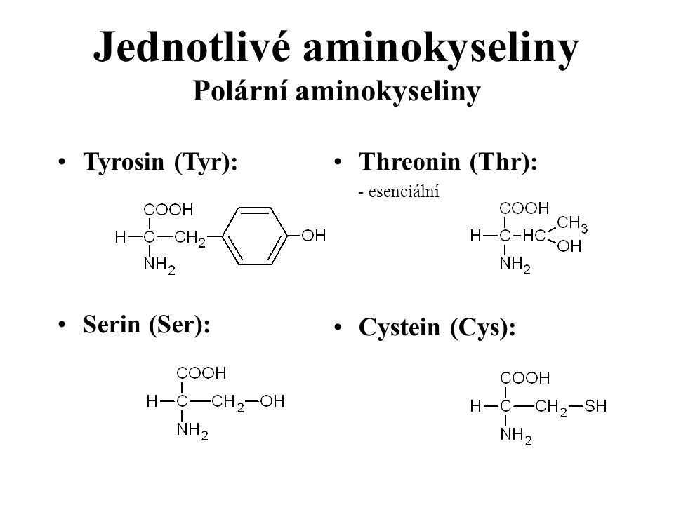 Jednotlivé aminokyseliny Polární aminokyseliny Tyrosin (Tyr): Serin (Ser): Threonin (Thr): - esenciální Cystein (Cys):