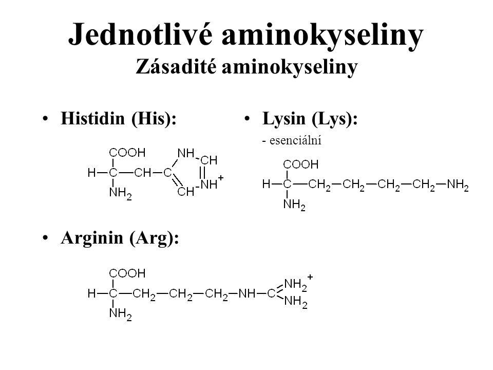 Jednotlivé aminokyseliny Zásadité aminokyseliny Histidin (His): Arginin (Arg): Lysin (Lys): - esenciální