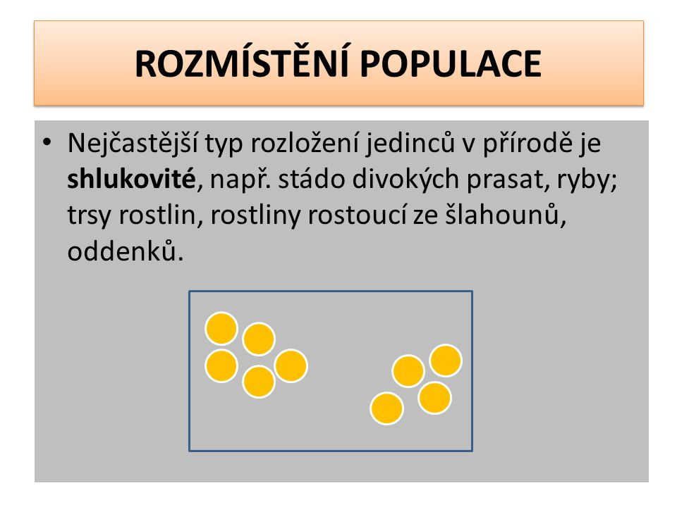 ROZMÍSTĚNÍ POPULACE Nejčastější typ rozložení jedinců v přírodě je shlukovité, např.