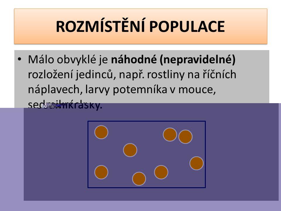 ROZMÍSTĚNÍ POPULACE Málo obvyklé je náhodné (nepravidelné) rozložení jedinců, např.