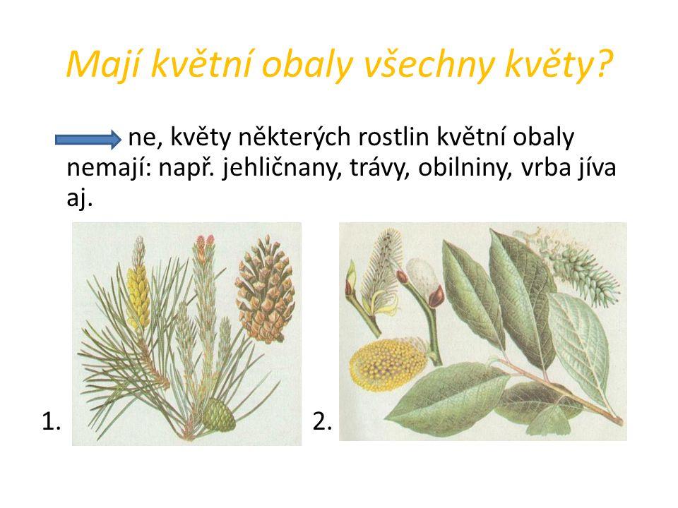 Mají květní obaly všechny květy? ne, květy některých rostlin květní obaly nemají: např. jehličnany, trávy, obilniny, vrba jíva aj. 1.2.