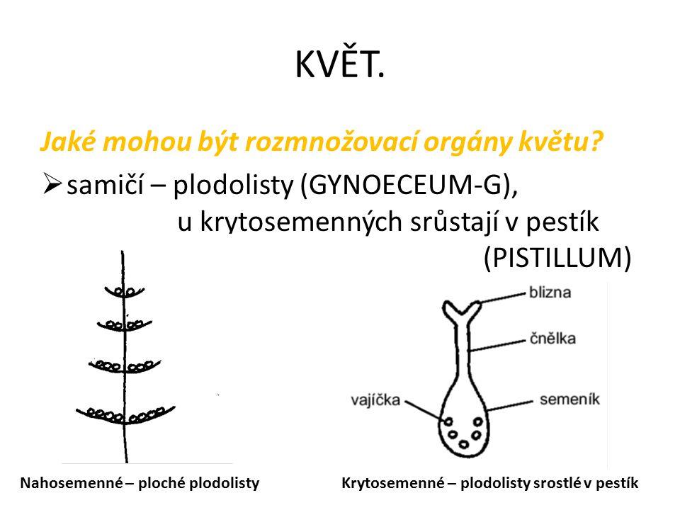 KVĚT. Jaké mohou být rozmnožovací orgány květu?  samičí – plodolisty (GYNOECEUM-G), u krytosemenných srůstají v pestík (PISTILLUM) Nahosemenné – ploc