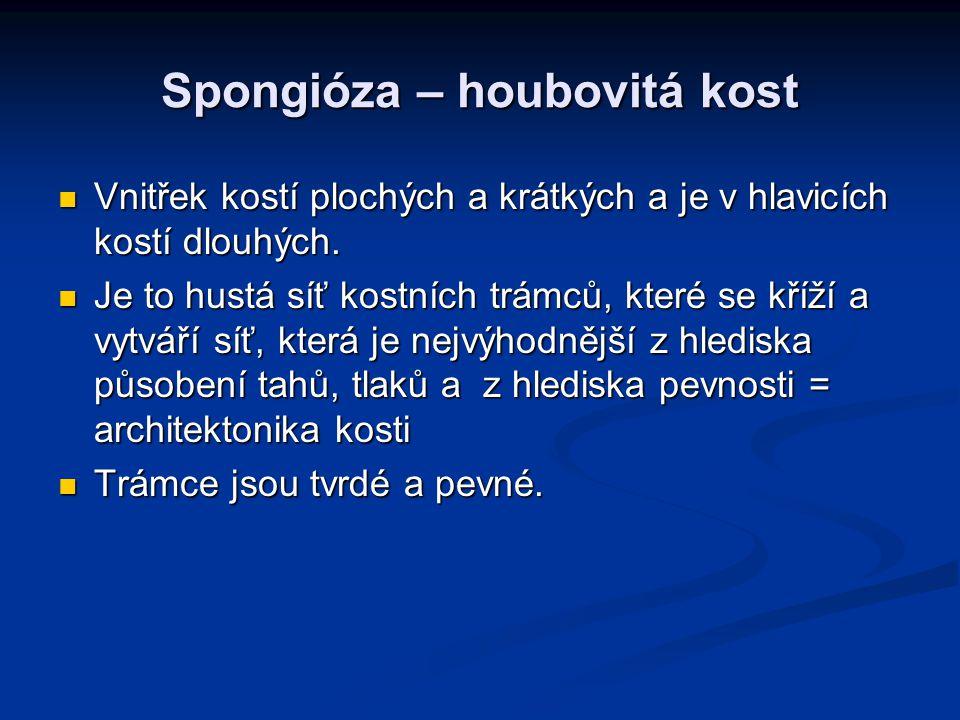Spongióza – houbovitá kost Vnitřek kostí plochých a krátkých a je v hlavicích kostí dlouhých. Vnitřek kostí plochých a krátkých a je v hlavicích kostí
