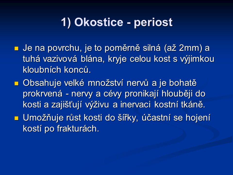 1) - periost 1) Okostice - periost Je na povrchu, je to poměrně silná (až 2mm) a tuhá vazivová blána, kryje celou kost s výjimkou kloubních konců.