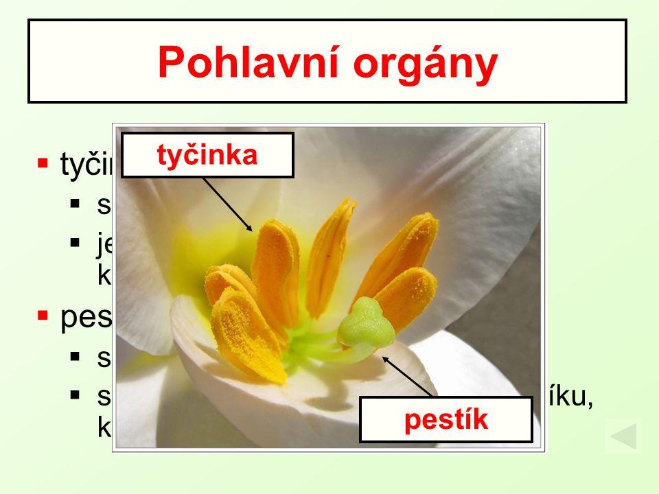  tyčinka  samčí pohlavní orgán květu  je tvořená nitkou a prašníkem kde vznikají pylová zrna  pestík  samičí pohlavní orgán květu  skládá se z b