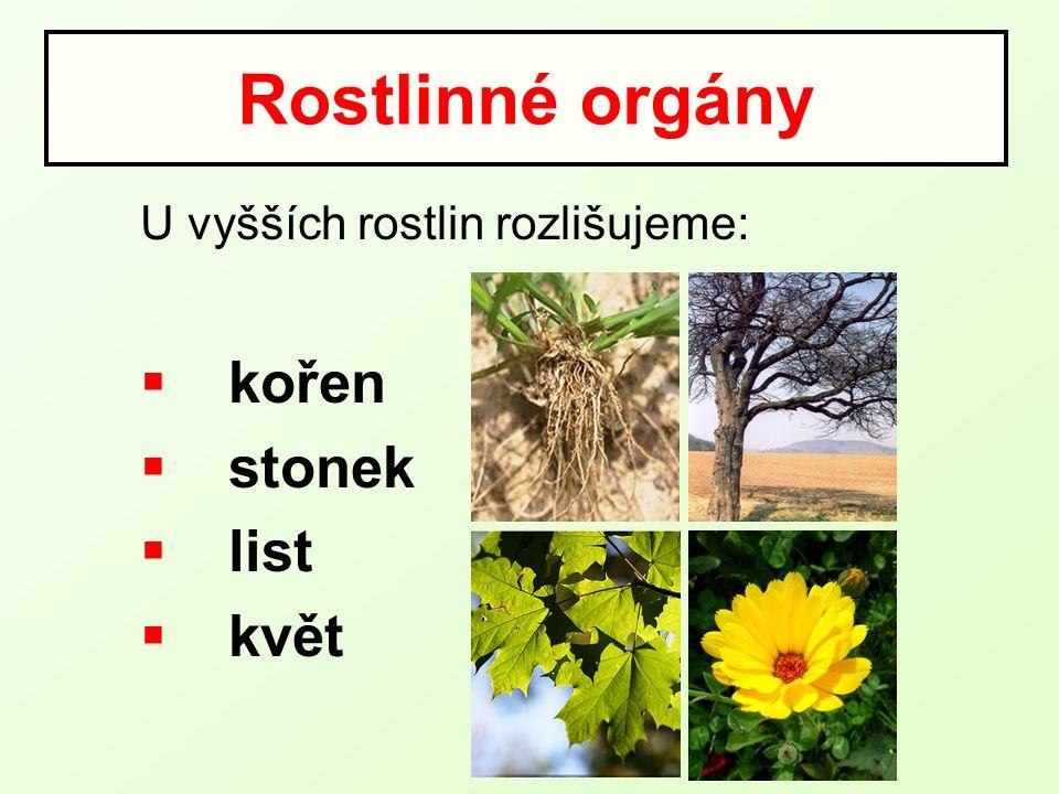 Rostlinné orgány U vyšších rostlin rozlišujeme:  kořen  stonek  list  květ