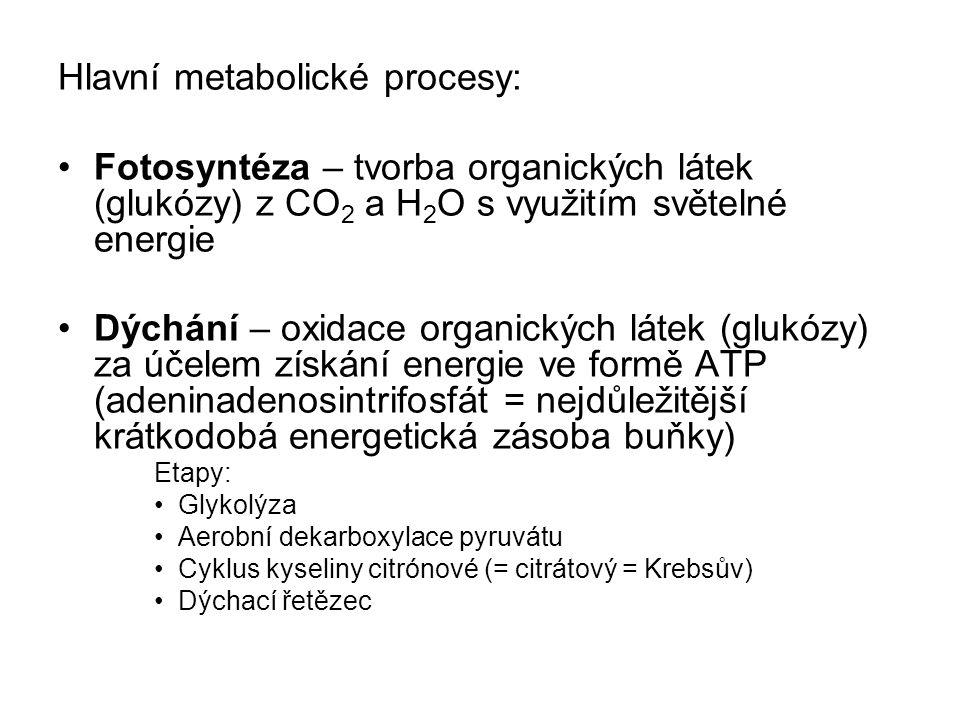 Hlavní metabolické procesy: Fotosyntéza – tvorba organických látek (glukózy) z CO 2 a H 2 O s využitím světelné energie Dýchání – oxidace organických látek (glukózy) za účelem získání energie ve formě ATP (adeninadenosintrifosfát = nejdůležitější krátkodobá energetická zásoba buňky) Etapy: Glykolýza Aerobní dekarboxylace pyruvátu Cyklus kyseliny citrónové (= citrátový = Krebsův) Dýchací řetězec