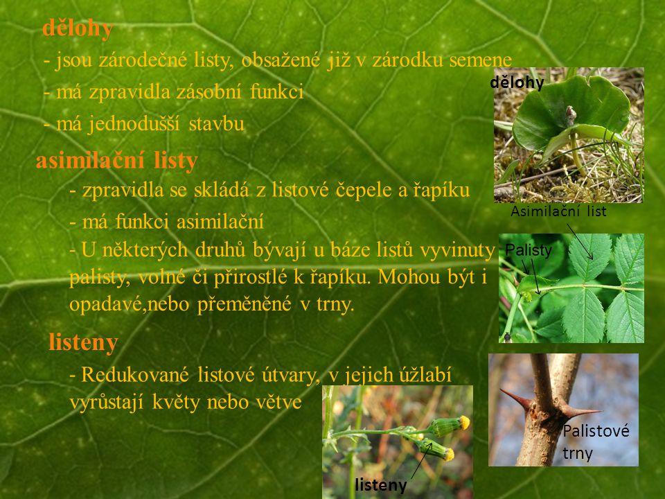 © Letohradské soukromé gymnázium o.p.s. dělohy - jsou zárodečné listy, obsažené již v zárodku semene - má zpravidla zásobní funkci - má jednodušší sta