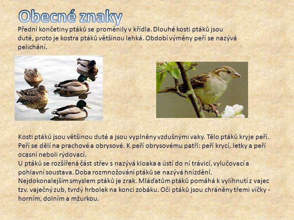 Přední končetiny ptáků se proměnily v křídla. Dlouhé kosti ptáků jsou duté, proto je kostra ptáků většinou lehká. Období výměny peří se nazývá pelichá