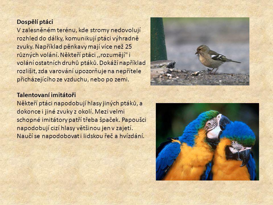 Dospělí ptáci V zalesněném terénu, kde stromy nedovolují rozhled do dálky, komunikují ptáci výhradně zvuky. Například pěnkavy mají více než 25 různých