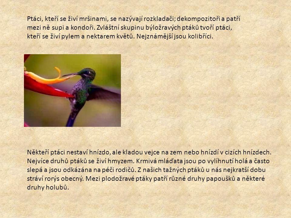 Ptáci, kteří se živí mršinami, se nazývají rozkladači; dekompozitoři a patří mezi ně supi a kondoři. Zvláštní skupinu býložravých ptáků tvoří ptáci, k